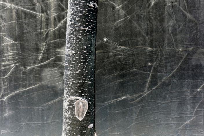 Marion Kieft - Urban tree 2, 2017 - fotoprint op aluminium/dibond