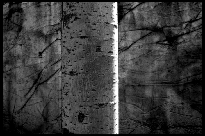 Marion Kieft - Urban tree 4, 2017 - fotoprint op aluminium/dibond