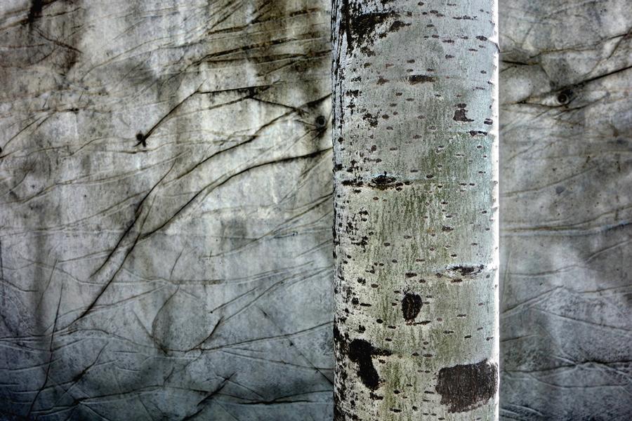 Marion Kieft - Urban tree 3, 2017 - fotoprint op aluminium/dibond