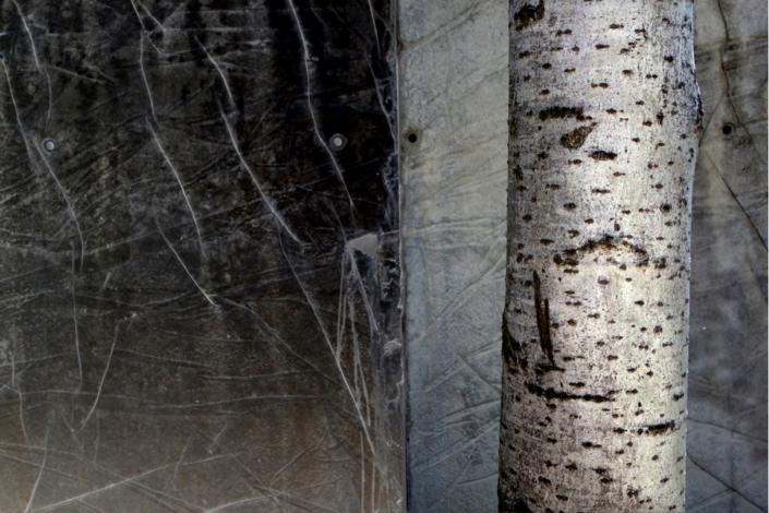 Marion Kieft - Urban tree 1, 2017 - fotoprint op aluminium/dibond