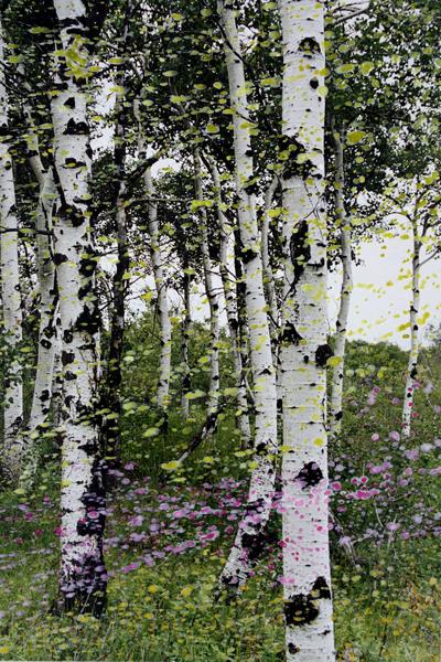 Marion Kieft - Spring is in the air, 2005 - bewerkte foto - 30 x 45 cm