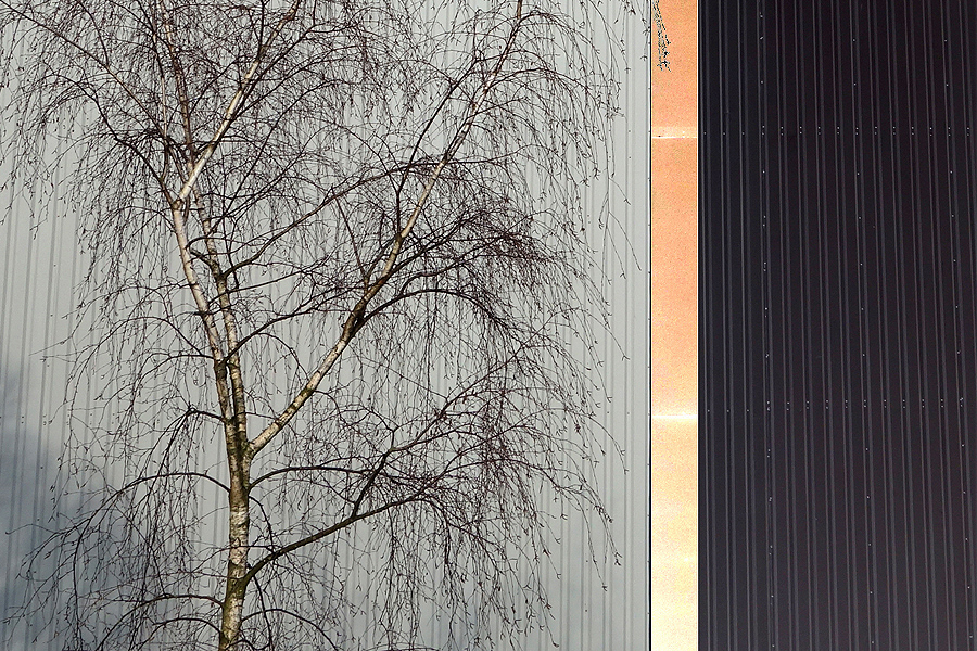Marion Kieft - Urban tree 5, 2017 - fotoprint op aluminium/dibond