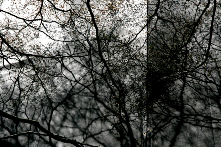 Marion Kieft - Urban tree 6, Japan - fotoprint op aluminium/dibond