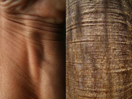 Marion Kieft - Skin 2, 2010 - fotoprint, 60 x 90 cm